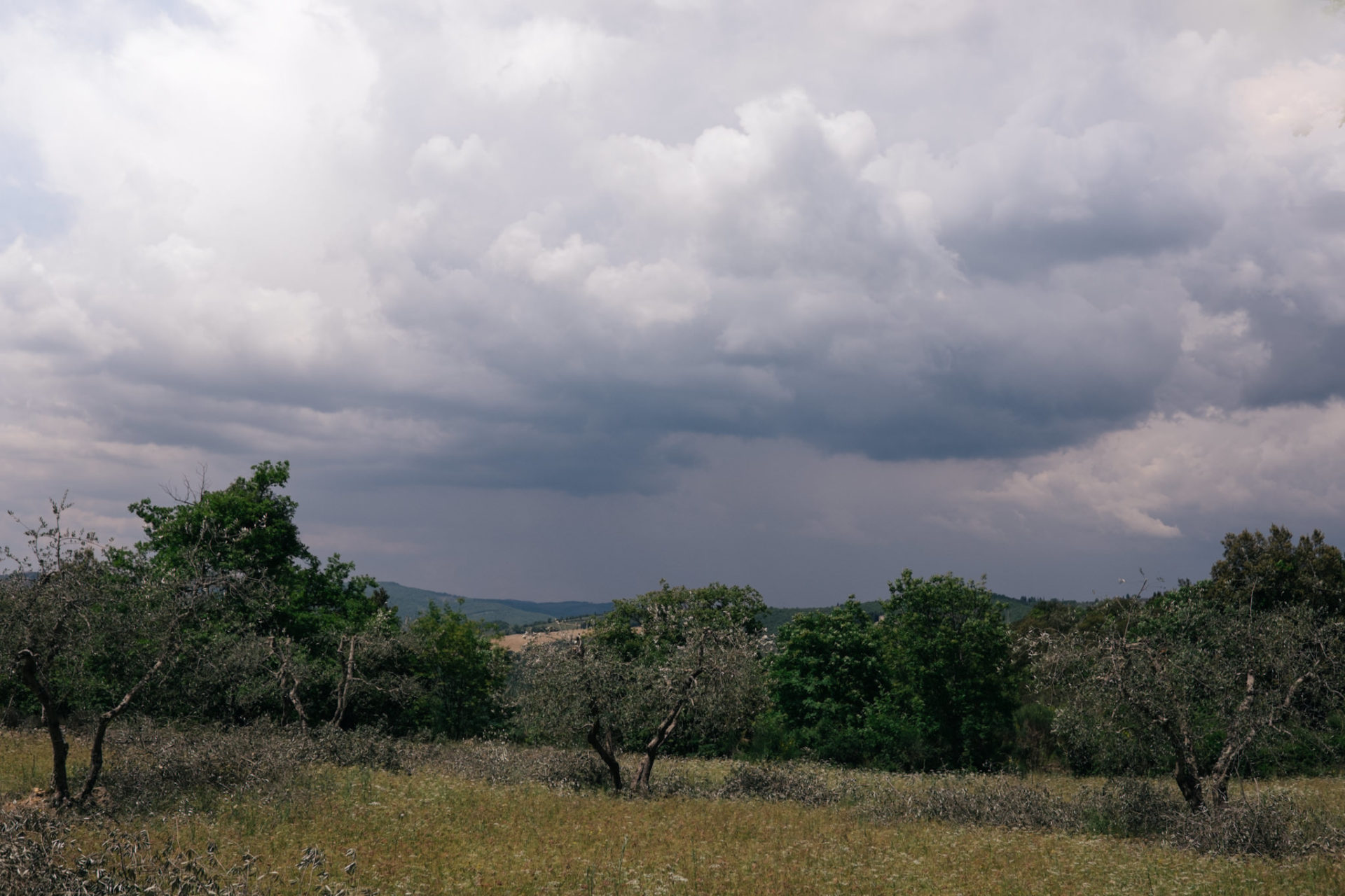 europa roadtrip mit hund-toskana entdecken-hochzeitsfotograf Toskana-chianti urlaub