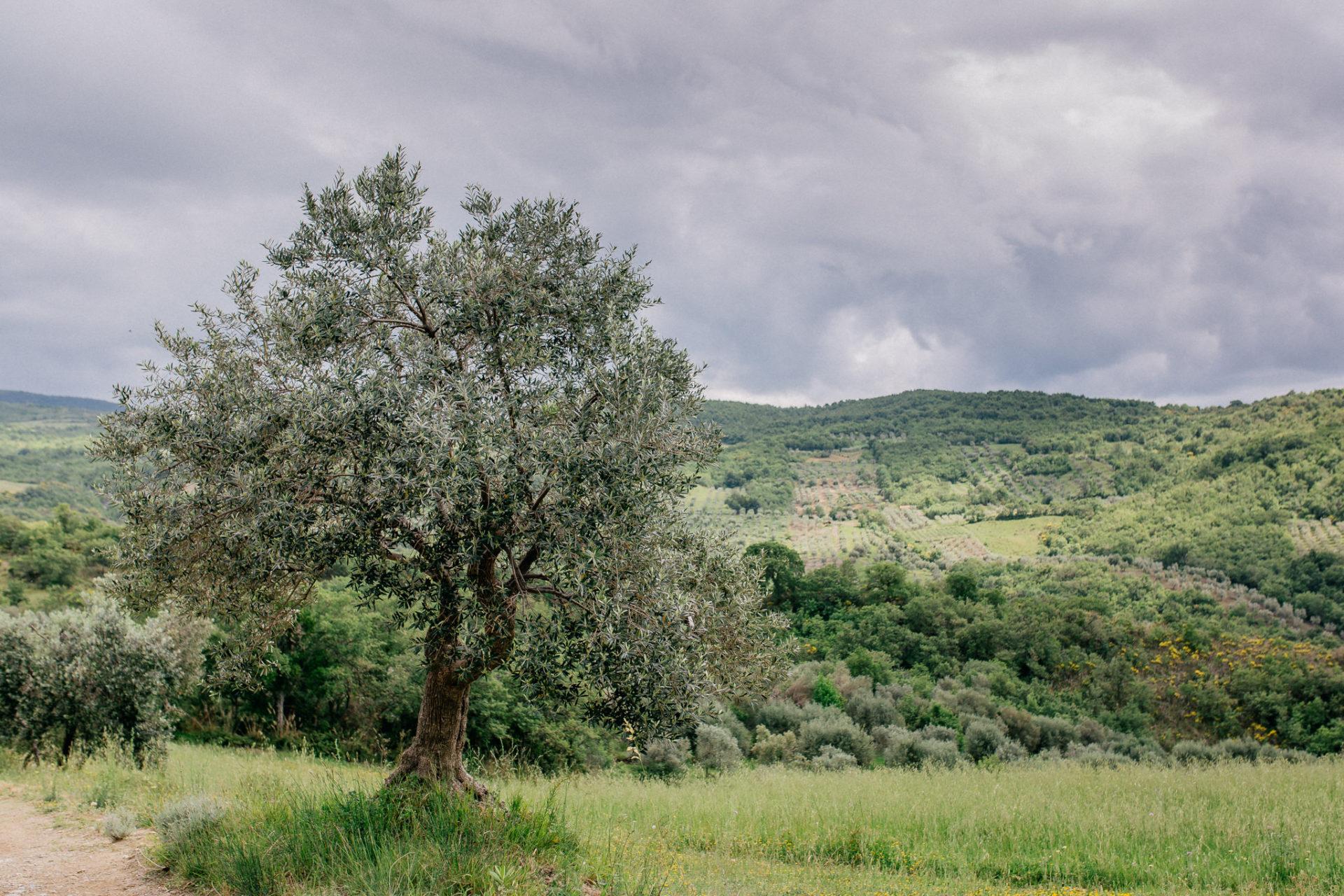 heiraten Toskana-hochzeitsfotograf toskana-italien roadtrip-europa entdecken-olivenhaine-natur genießen-italien wandern